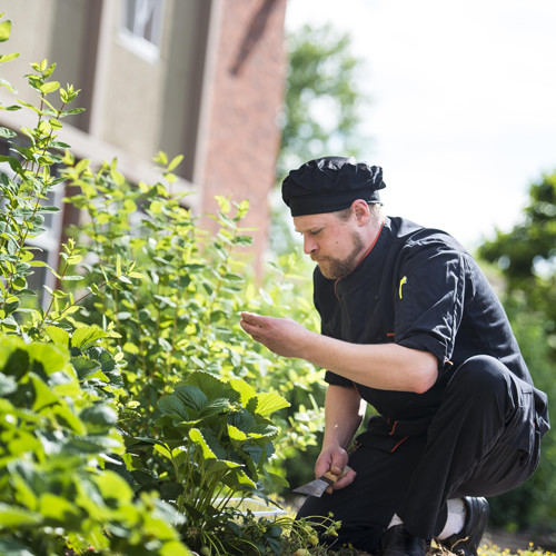 Chef in Callahan Food Forest