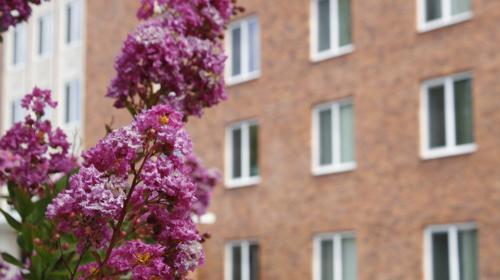 Residence Hall image